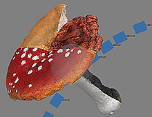 "Previs ""Giant Triple Mushroom"""